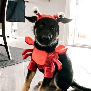 Lobster Halloween Dog & Cat Costume - Hyde & EEK!